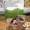 Los agricultores solicitan un reaseguro público de exportaciones