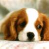 Contratar seguros para perros todo lo que debes saber