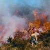 AXA 10 consejos para afectados por incendios forestales