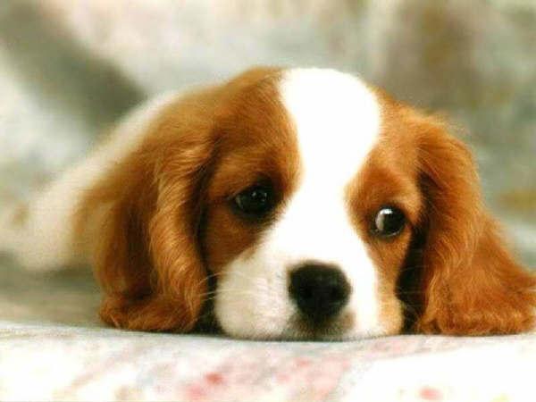 Contratar seguros para perros