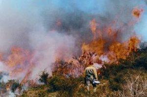 afectados por incendios forestales